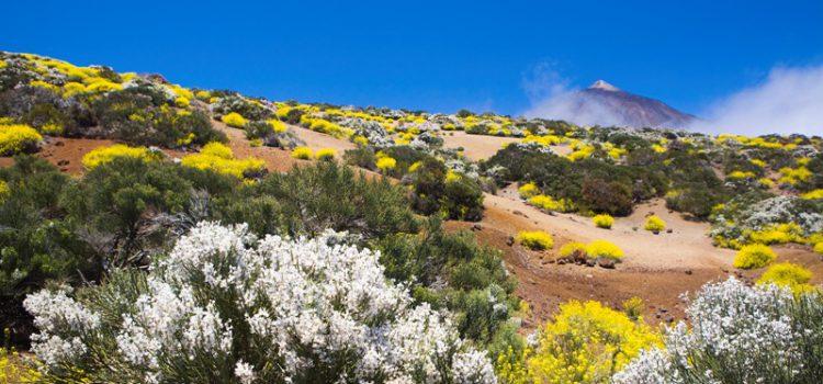 Turismo de Tenerife partipará en el 'Festival Experiencias de Ecoturismo en España'