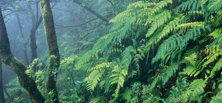 Tenerife refuerza su apuesta como destino  sostenible con el apoyo del programa Travelife