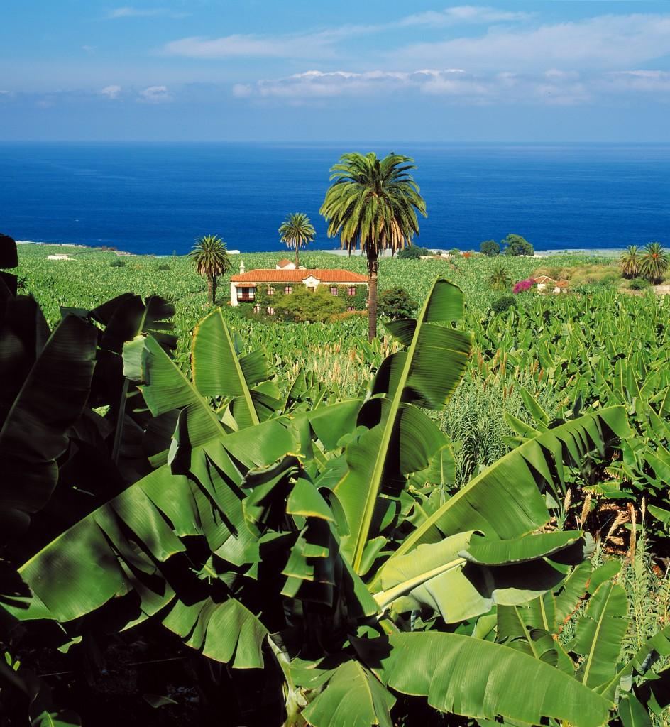 GARACHICO-Isla-Baja.jpg
