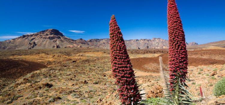 El Parque Nacional del Teide recibió más de cuatro millones de visitantes de 44 nacionalidades en 2016