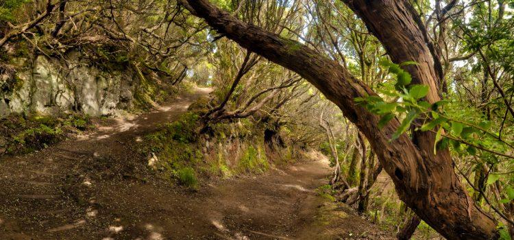 La Isla celebrará en 2015 el Tenerife Walking Festival