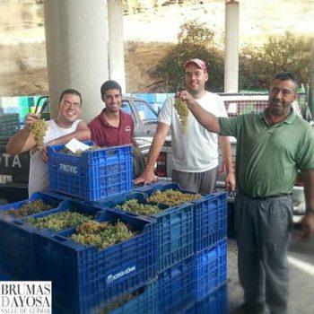 Viticultores en vendimia