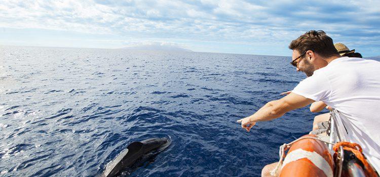 El Cabildo pide al Estado que suspenda temporalmente la concesión de licencias para la observación de cetáceos