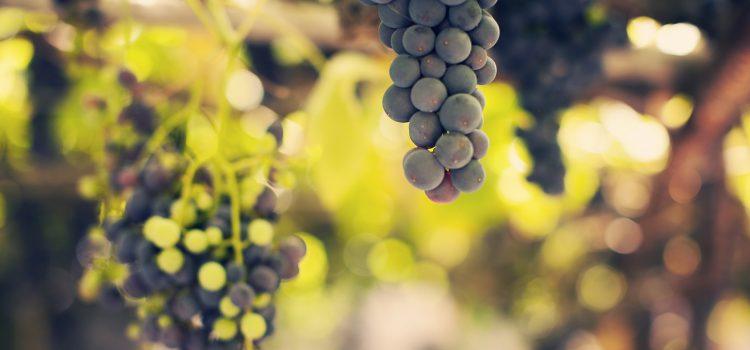 Los vinos de Tenerife, en un reportaje de la CNN en Estados Unidos