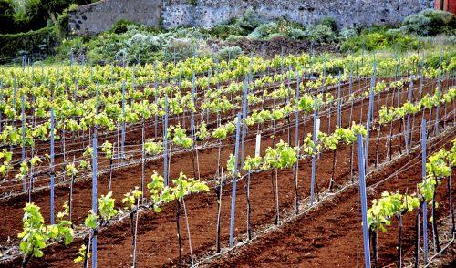 Red Cide asesora a las empresas de las Rutas del Vino de la comarca nordeste de Tenerife