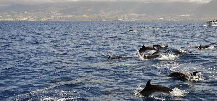 Sello de calidad de la Carta por la Sostenibilidad del Avistamiento de Cetáceos para la empresa Exmaran
