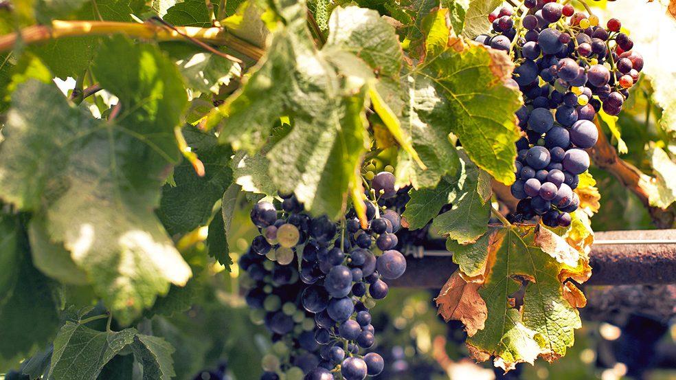 cropped-detalle_vino_buenavista_01degosto_4481_baja.jpg