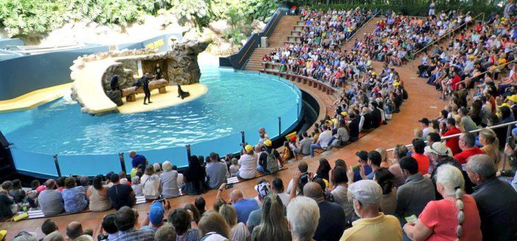 Loro Parque renueva la instalación de los leones marinos