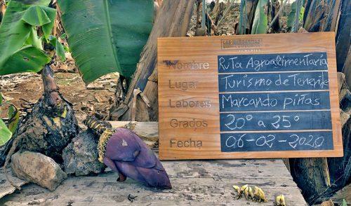 Turismo de Tenerife avanza en la evaluación y consolidación de las rutas agroalimentarias