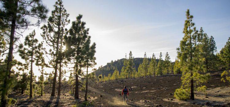 ¡Buscamos prácticas de turismo sostenible!