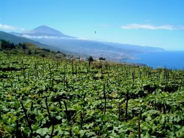 El Sauzal-Tenerife