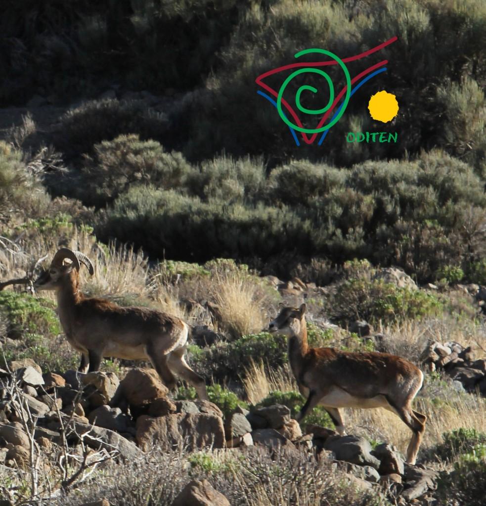 Restricciones en el Parque Nacional del Teide 2013