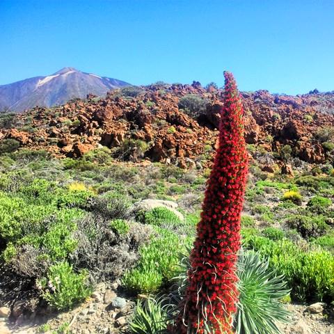 Ruta guiada en el Teide – Parador-Montaña Guajara – Valle Ucanca – Parador