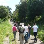 Camino-los-Laureles-Tegueste
