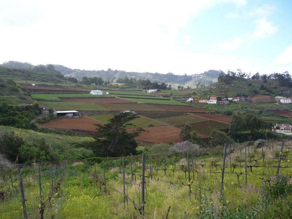 Ruta en Bicicleta por los viñedos de Tegueste en Tenerife