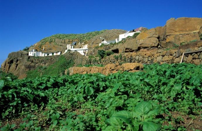 Chinamada-Tenerife