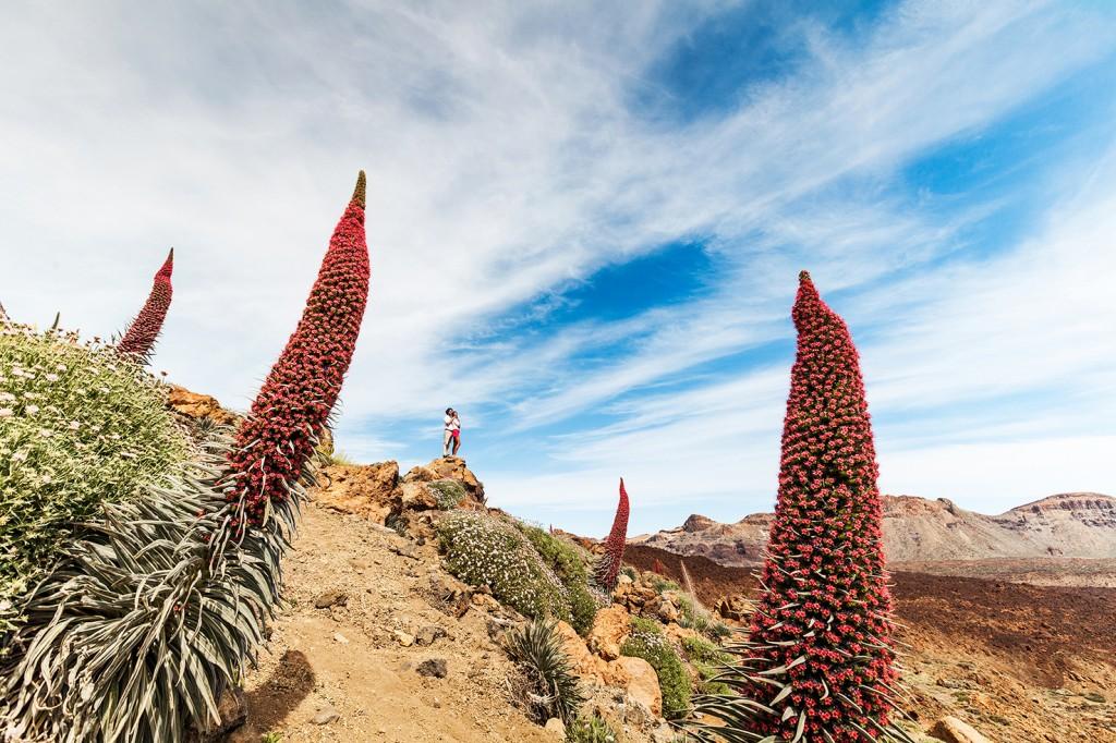 11 lugares imprescindibles de Tenerife