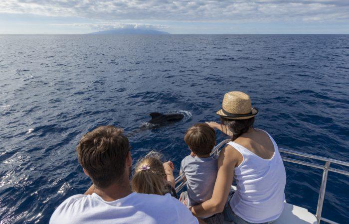 Avistamiento de cetáceos: ballenas y delfines en Tenerife
