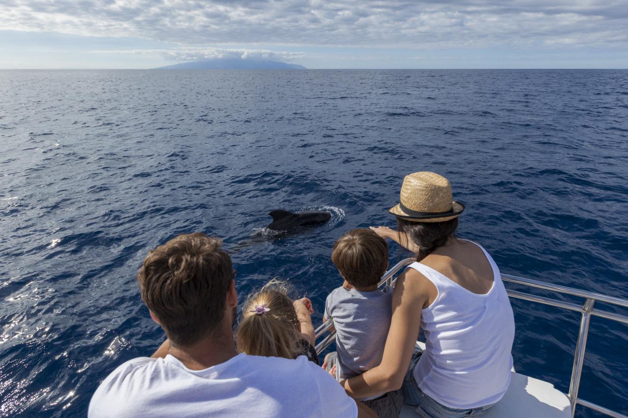 Avistamiento de cet ceos ballenas y delfines en tenerife for Empresas de transporte en tenerife