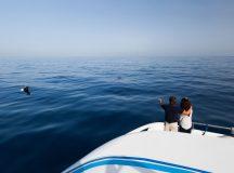Cetáceos Tenerife