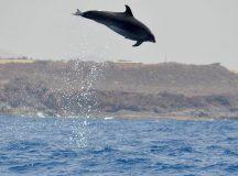 Ver delfines en Tenerife, no te lo puedes perder