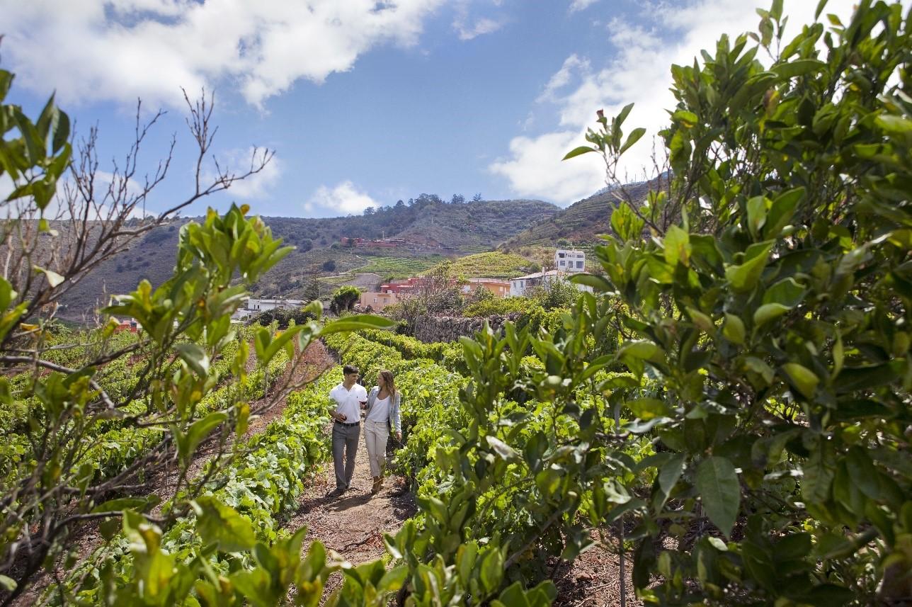 Los Vinos de Tenerife, los protagonistas de noviembre