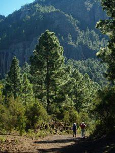 Senderos Verdes Tenerife Walking Festival 2019