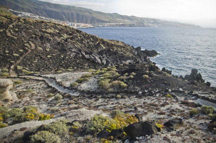 Samarines Candelaria Tenerife