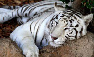 Loro Parque Mejor Zoologico