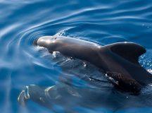 La excursión en la que conocí a las ballenas y delfines de Tenerife